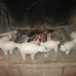 D'inverno le ceramiche si asciugano davanti al camino, prima di essere infornate