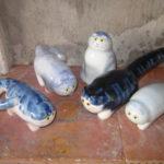 "cinque gatti ""in blu"""